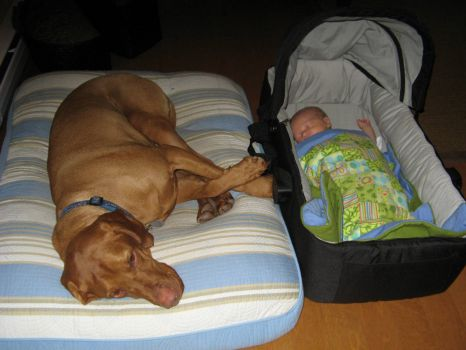 after a long days hike dog and baby