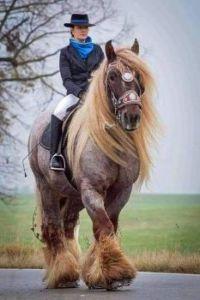 Norman War Horse