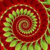 Spiral 01 Medium