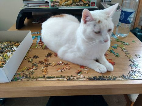 Lily helps do a jigsaw (large)