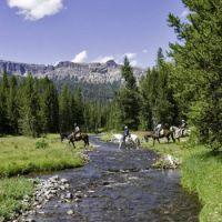 Trail Ride, Anyone?