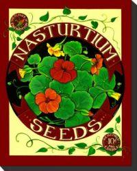 nasturtium-seed-pack