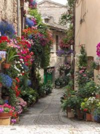 Street and flowers