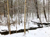 woods_snow_winter_land
