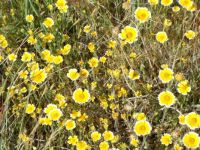 Tidy Tips Wildflowers
