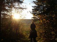 Horseback - Large