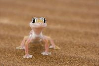 Gecko - isn't he cute?