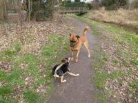Series Dogs in the Park. Bambi meets Norman.  'Lets go have a run'