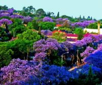 Pretoria, The Jacaranda City - South Africa
