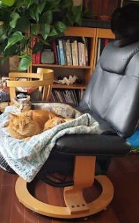 3 cats on chair 2021