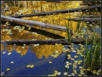 ~Aspen Reflection~