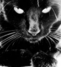 oct. cat