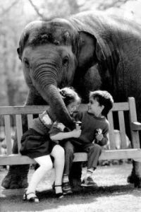 """Elephant Having a Bite"""