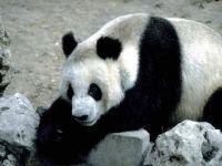 panda zoo vienna