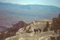 PRYOR MOUNTAIN BACHELORS  2002