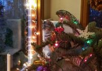 Ruby's Christmas