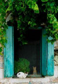 cats in the doorway