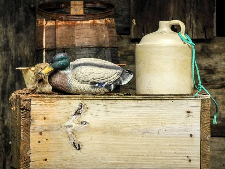 Still life with duck decoy