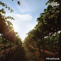 #WeinPuzzle - Grover Zampa (17)