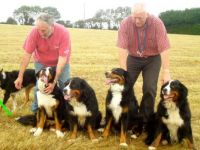 How many Bernese?