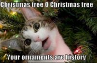 Oh Christmas Tree