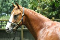 ALI - Grandy's Horse
