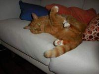 Rufus the cat