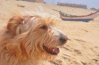 Lizzi at the beach