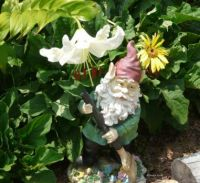 Gnome with White Lily  July 2011