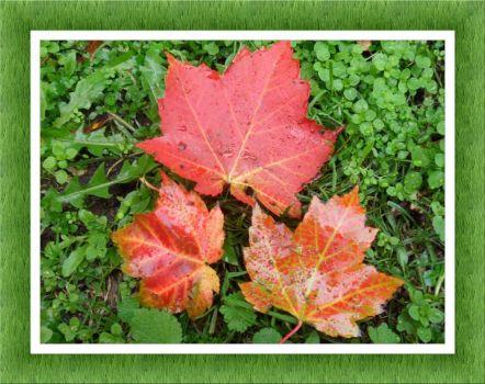 Podzimní nálada...  Autumn mood ...