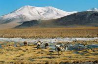 Bolivie Laguna - Colorada