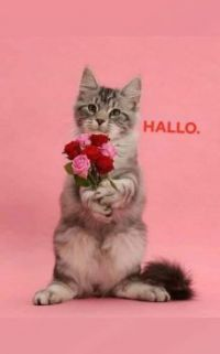 I have flowers for you