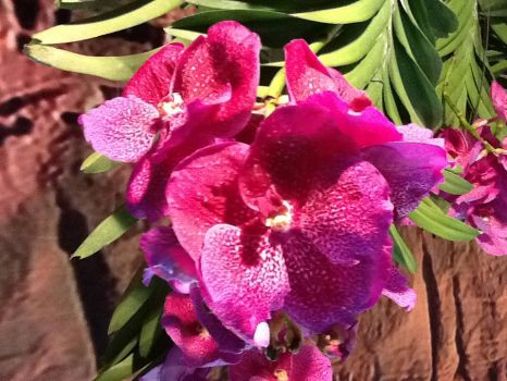 A beautiful orchid