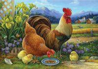 Chickens on a Farm