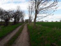 Z procházky