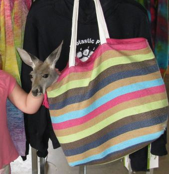 Hey..What's in that pouch..Oh that's a baby kangaroo
