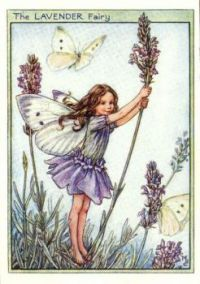 The lavender fairy by cicely mary barker