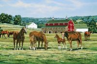 Hillside Country Horse Farm  ---Medium