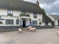 Green Dragon, Brook, New Forest, Hampshire