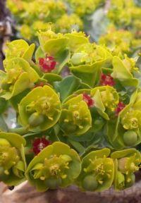 Succulent in Santa Fe, NM