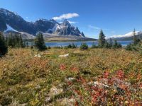 Tonquin  Valley meadow