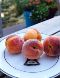 Summer peaches!