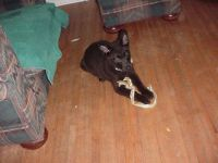 Puppy Chip  2005