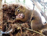 Motherhood as in all species