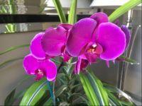 Enjoying my orchid