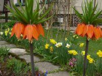 jarná záhrada
