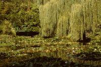 Monets Garten Giverny Frankreich
