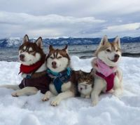 Kitten raised by huskies....sweet!!
