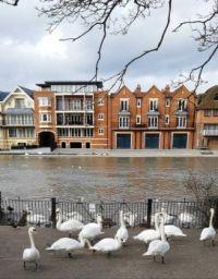 Thames at Windsor UK