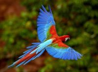 Flight of the Macaw